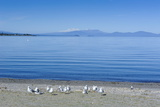 The Blue Waters of Lake Taupo with the Tongariro National Park in the Background Photographic Print by Michael Runkel