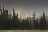 Hazy Teton Range and Pine Trees Near Phelps Lake, Grand Teton National Park, Wyoming, Usa Photographic Print by Eleanor Scriven