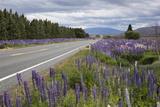 Highway 8 Passing Through Field of Lupins, Near Lake Tekapo, Canterbury Region Fotografisk tryk af Stuart Black