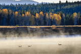 Wildfowl on Snake River Surrounded by a Cold Dawn Mist in Autumn (Fall) Photographic Print by Eleanor Scriven