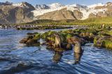 Antarctic Fur Seals (Arctocephalus Gazella) in Snow Melt River in Gold Harbor Photographic Print by Michael Nolan