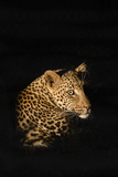 Leopard (Panthera Pardus), Madikwe Game Reserve, South Africa, Africa Fotografisk trykk av Ann and Steve Toon