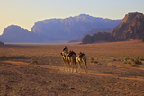 Bedouin with Camels, Wadi Rum, Jordan, Middle East Photographic Print by Neil Farrin