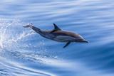 Long-Beaked Common Dolphin (Delphinus Capensis) Leaping Near Isla Santa Catalina Photographic Print by Michael Nolan