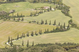 Cypress Trees Line a Winding Road in the Val D'Orcia, Tuscany, Italy, Europe Photographic Print by Julian Elliott