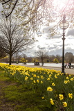 Visitors Walking Along the Serpentine with Daffodils in the Foreground, Hyde Park, London Fotografie-Druck von Charlie Harding