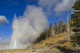 Grand Geyser Erupts, Forcing Steam High into the Air, Upper Geyser Basin Photographic Print by Eleanor Scriven