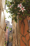 Narrow Street and Hibiscus Flowers, Old Town, Corfu Town Photographic Print by Eleanor Scriven