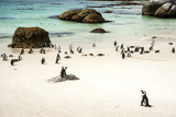 African Penguins at Foxy Beach, Boulders Beach National Park, Simonstown, South Africa, Africa Photographic Print by Kimberly Walker