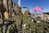 Fish Drying on Racks in the Town of Ilulissat, Greenland, Polar Regions Photographic Print by Michael Nolan