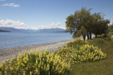 Lake Te Anau, Te Anau, Southland, South Island, New Zealand, Pacific Photographic Print by Stuart Black