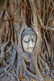 Stone Buddha Head Entwined in the Roots of a Fig Tree, Wat Mahatat, Ayutthaya Historical Park Photographic Print by Tuul