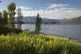 Spring Flowers on Lake Wanaka, Wanaka, Otago, South Island, New Zealand, Pacific Photographic Print by Stuart Black