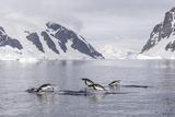 Adult Gentoo Penguins (Pygoscelis Papua) Porpoising, Danco Island, Antarctica, Polar Regions Photographic Print by Michael Nolan