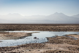 Flamingo Standing in Water at Laguna De Chaxa (Chaxa Lake) at Dawn, San Pedro, Chile, South America Photographic Print by Kimberly Walker