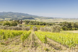 Vineyards Near to Montalcino, Val D'Orcia, UNESCO World Heritage Site, Tuscany, Italy, Europe Photographic Print by Julian Elliott