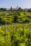 Slovenia Countryside and Vineyards and the Hill Top Town of Medana Photographic Print by Matthew Williams-Ellis