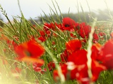 Poppy Field, Figueres, Girona, Catalonia, Spain, Europe Photographic Print by Mark Mawson