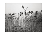 Prospect Park Lake With Grasses - Botanical Landscape Brooklyn Photographic Print by Henri Silberman