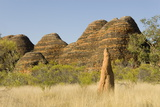 Sandstone Hills and Termite Mounds in the Domes Area of Purnululu National Park (Bungle Bungle) Photographic Print by Tony Waltham