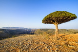 Dracaena Cinnabari (The Socotra Dragon Tree) (Dragon Blood Tree) Photographic Print by Michael Runkel