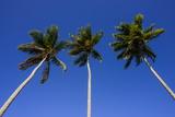 Playa Rincon, Las Galeras, Semana Peninsula Photographic Print by Michael Runkel