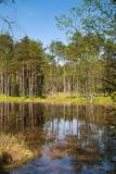 Viru Bog (Viru Raba) Peat Swamp, Lahemaa National Park, Harjumaa Photographic Print by Nico Tondini