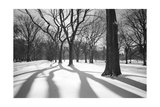 Central Park Trees and Shadows In Snow - NYC Park Photographic Print by Henri Silberman