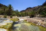 Very Green Pond in a Valley in the Dixsam Plateau on the Island of Socotra, Yemen, Middle East Photographic Print by Michael Runkel