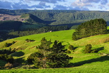 Beautiful Scenery in the Hinterland of Northland, North Island, New Zealand, Pacific Photographic Print by Michael Runkel