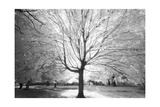 Prospect Park Infrared Tree - Brooklyn Park in Fall Photographic Print by Henri Silberman