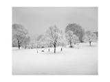 Prospect Park, Brooklyn In Snow2 - Winter Scene With Dog Fotografisk tryk af Henri Silberman
