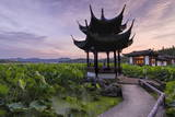 Pavilion, Lotus Field and Zig Zag Bridge at West Lake, Hangzhou, Zhejiang, China, Asia Photographic Print by Andreas Brandl