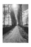 Normandy, France Trees - French Countryside Landscape Photographic Print by Henri Silberman