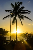 Backlit Palm Tree in the Fortress of Fortaleza San Felipe, Puerto Plata, Dominican Republic Photographic Print by Michael Runkel