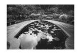 Lily Pond, Conservatory Gardens, NYC - Central Park in Summer Photographic Print by Henri Silberman