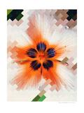 Starfire Prints by Natasha Wescoat