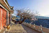 Dog Sitting in the Sun, with Plum Tree and Lijiang Roofs, Lijiang, Yunnan, China, Asia Photographic Print by Andreas Brandl