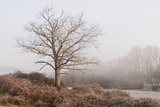 Ramon Roura - Walnut Tree Fotografická reprodukce