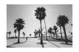 Venice Beach Palm Trees - Los Angeles Beaches Reprodukcja zdjęcia autor Henri Silberman
