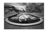 Brooklyn Botanic Gardens Lily Ponds - Infrared Garden Landscape Photographic Print by Henri Silberman