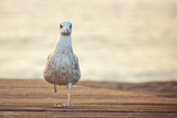 Seagull Photographic Print by by Juanedc