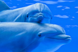 Delfines Photographic Print by  vdorse