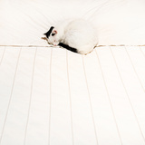 Cat Sleep Photographic Print by Roc Canals Photography