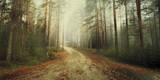 Misty Trail Giclee Print by Andreas Stridsberg