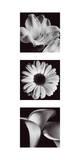 Blumentafel II Giclée-Druck von Bill Philip