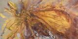 Gold Lotus II Giclee-trykk av Caroline Ashwood