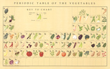Periodic Table of the Vegetables Prints by Naomi Weissman