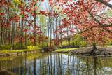Japanese Maple and Pond in Spring Photographic Print by Richard T. Nowitz