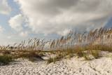 Gulf Coast State Park Photographic Print by Richard T. Nowitz